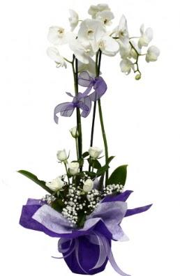 2 dallı beyaz orkide 5 adet beyaz gül  İstanbul güvenli kaliteli hızlı çiçek
