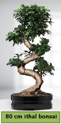 80 cm özel saksıda bonsai bitkisi  İstanbul hediye sevgilime hediye çiçek
