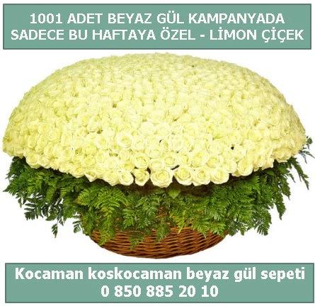 1001 adet beyaz gül sepeti özel kampanyada  İstanbul uluslararası çiçek gönderme