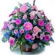 karisik mevsim kir çiçekleri  İstanbul uluslararası çiçek gönderme