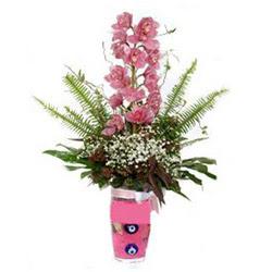 İstanbul kaliteli taze ve ucuz çiçekler  cam yada mika vazo içerisinde tek dal orkide çiçegi