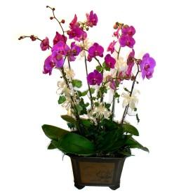 İstanbul çiçek gönderme  4 adet orkide çiçegi