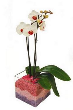 İstanbul çiçek satışı  tek dal cam yada mika vazo içerisinde orkide