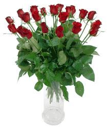 İstanbul hediye sevgilime hediye çiçek  11 adet kimizi gülün ihtisami cam yada mika vazo modeli