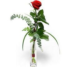 İstanbul çiçek , çiçekçi , çiçekçilik  Sana deger veriyorum bir adet gül cam yada mika vazoda