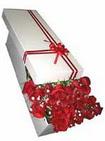 İstanbul hediye sevgilime hediye çiçek  11 adet 1.kalite magnum güller