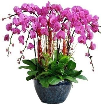 9 dallı mor orkide  İstanbul çiçek , çiçekçi , çiçekçilik
