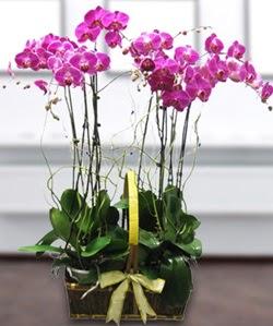 4 dallı mor orkide  İstanbul internetten çiçek siparişi