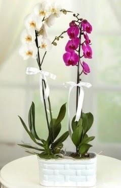1 mor 1 dal beyaz İthal orkide sepet içerisinde  İstanbul internetten çiçek satışı