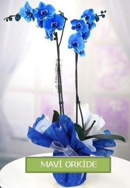 2 dallı mavi orkide  İstanbul çiçek yolla , çiçek gönder , çiçekçi