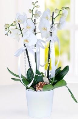 3 dallı beyaz orkide  Hediye Çiçek 14 şubat sevgililer günü çiçek