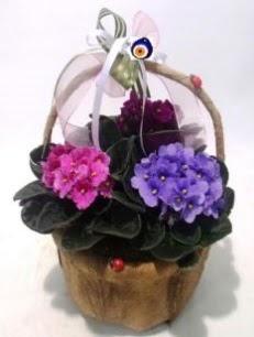 Sepet içerisinde 3 adet menekşe  Hediye Çiçek ucuz çiçek gönder
