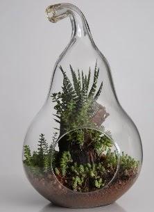 Armut cam küçük boy terrarium  İstanbul çiçek siparişi sitesi