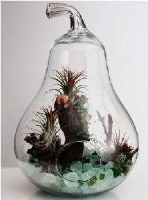 Orta boy Armut 6 adet kaktüs terrarium  İstanbul güvenli kaliteli hızlı çiçek