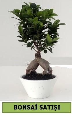 Bonsai japon ağacı satışı  İstanbul çiçek siparişi sitesi