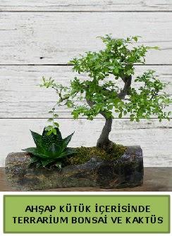 Ahşap kütük bonsai kaktüs teraryum  İstanbul İnternetten çiçek siparişi