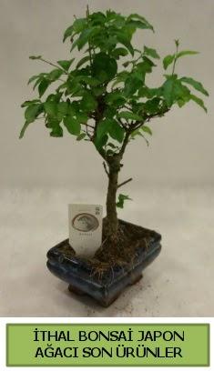 İthal bonsai japon ağacı bitkisi  İstanbul hediye çiçek yolla