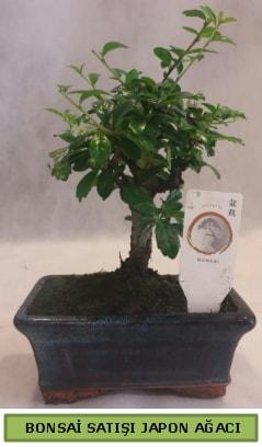 Minyatür bonsai ağacı satışı  İstanbul anneler günü çiçek yolla