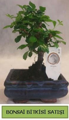 Bonsai ithal görsel minyatür japon ağacı  İstanbul çiçek mağazası , çiçekçi adresleri