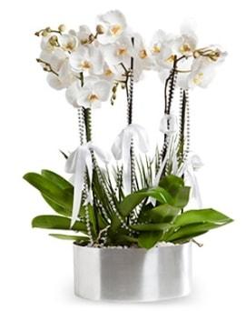 Beş dallı metal saksıda beyaz orkide  Hediye Çiçek 14 şubat sevgililer günü çiçek