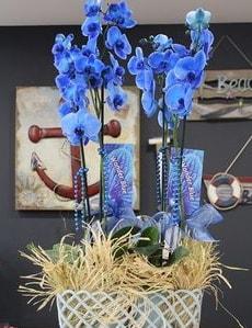 4 dallı özel mavi orkide  İstanbul çiçek gönderme sitemiz güvenlidir