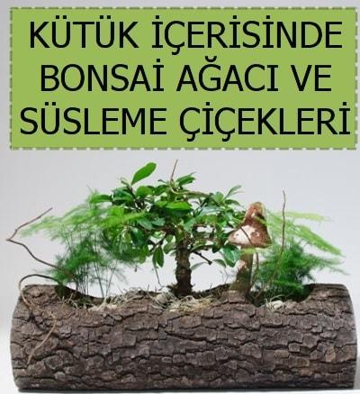 Kütük içerisinde bonsai japon ağaç bitkisi  İstanbul çiçek online çiçek siparişi