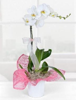 Tek dallı beyaz orkide seramik saksıda  Hediye Çiçek anneler günü çiçek yolla
