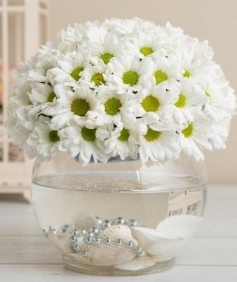 Fanusta beyaz Papatya  İstanbul çiçek online çiçek siparişi