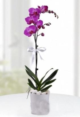Tek dallı saksıda mor orkide çiçeği  İstanbul çiçek yolla , çiçek gönder , çiçekçi