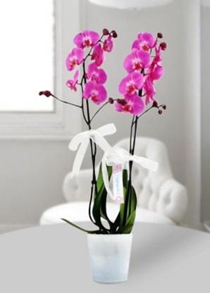 Çift dallı mor orkide  İstanbul çiçek yolla , çiçek gönder , çiçekçi