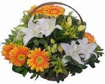 İstanbul online çiçek gönderme sipariş  sepet modeli Gerbera kazablanka sepet
